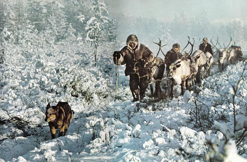 155 Якуты в тайге, охотятся за горностаем, лисицей, и т.д. даже зимой, при температуре -60С. Собака бежит впереди.jpg