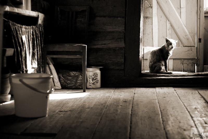 Деревенская зарисовка. Автор Алексей Юрченко.jpg