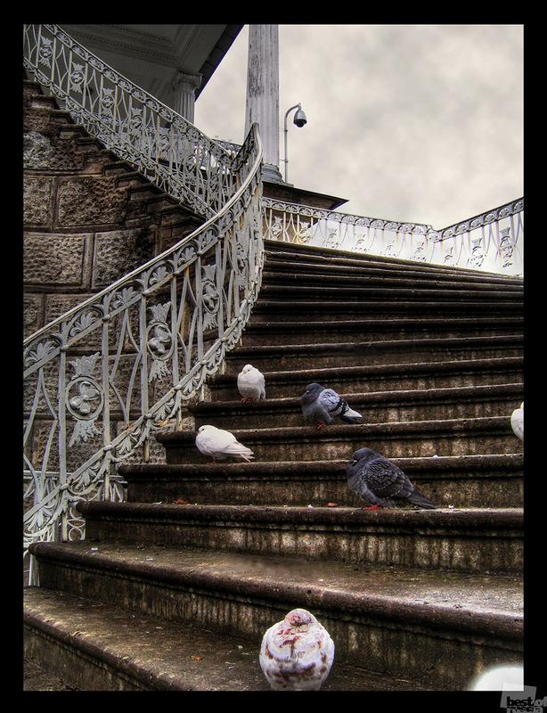 Лестница. Автор Наталия Рыбасенко.jpg