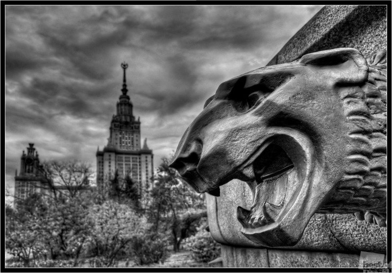 Lion. Автор Юрий Дмиртиенко.jpg