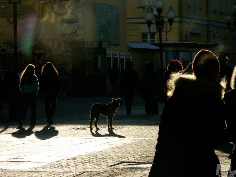Свет. Тень. Цой. Автор  М. Дьяченко.jpg