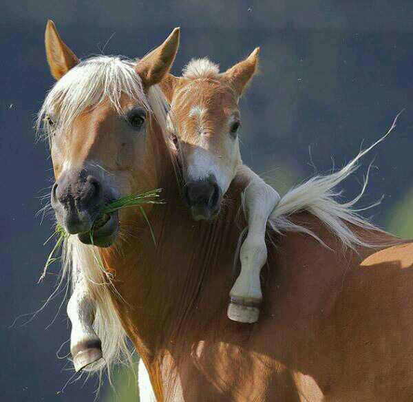 Лошадки:-)