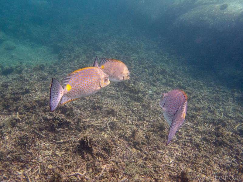 Подводная беседа