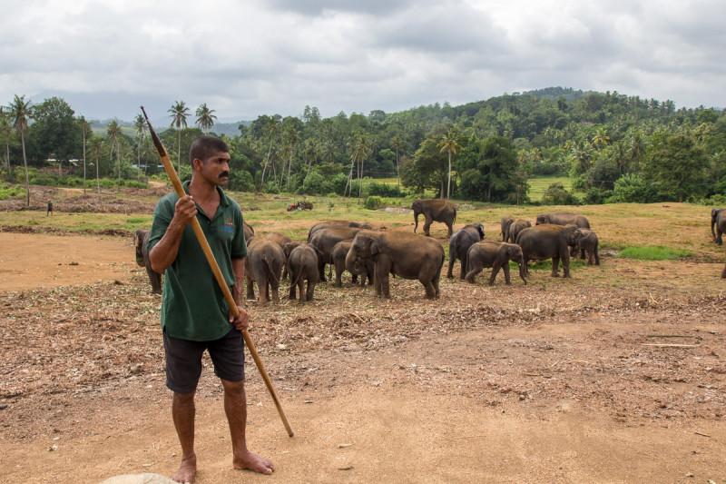 слоники в питомнике