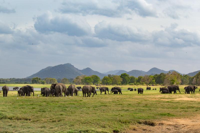слоники в Миннерии