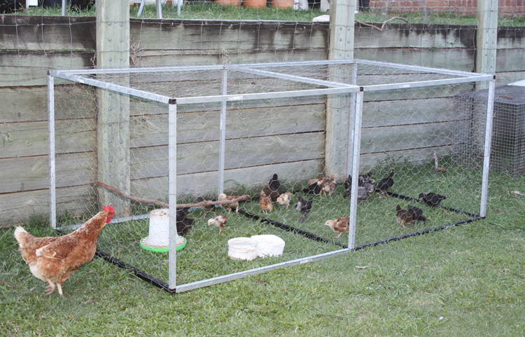 Attrayant Backyard Poultry Forum