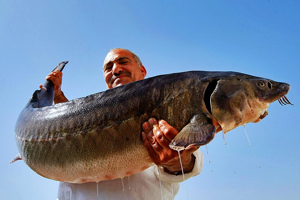 виды рыб в севане фото какой стран мира