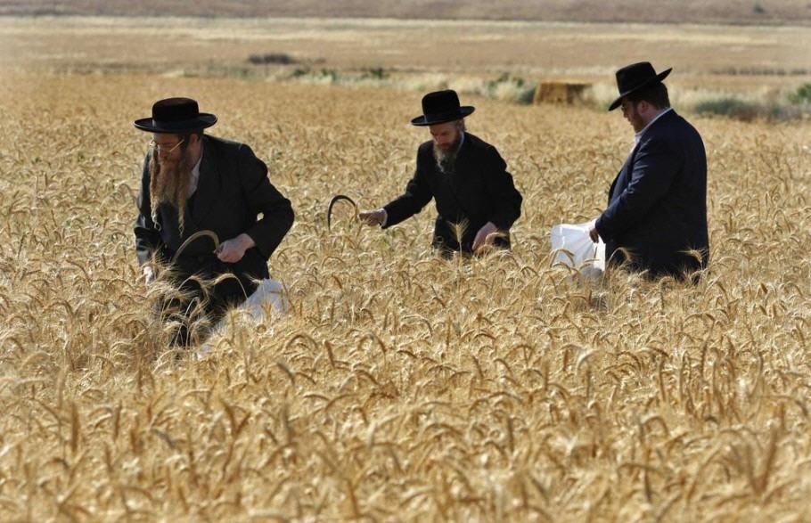 это картинка русское поле евреи найдете