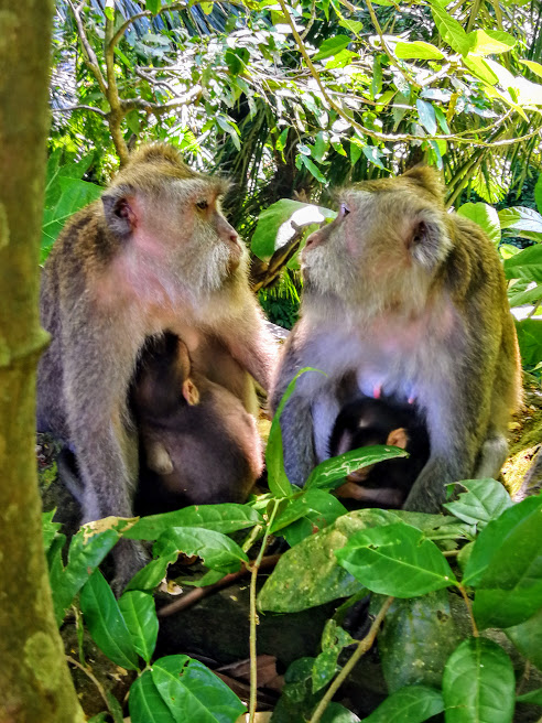 обезьянки (1).jpg