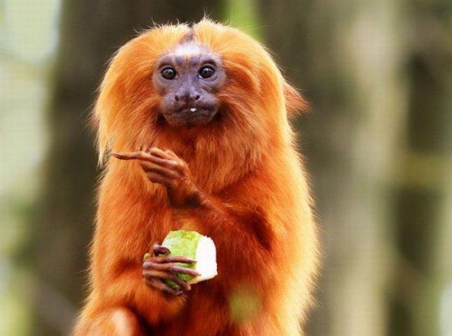 обезьяна8