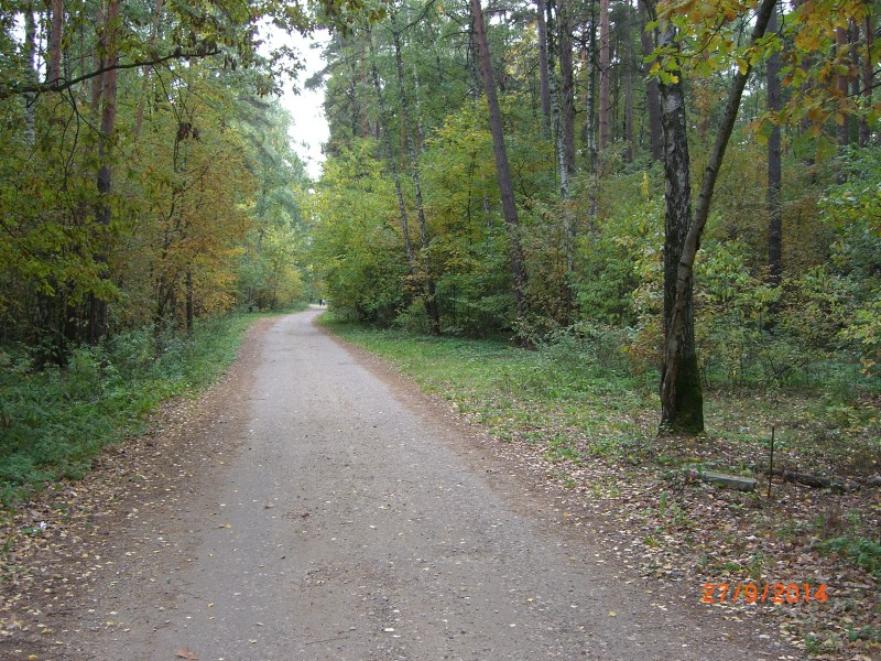 В Рублёвском лесу по дороге в Крылатское