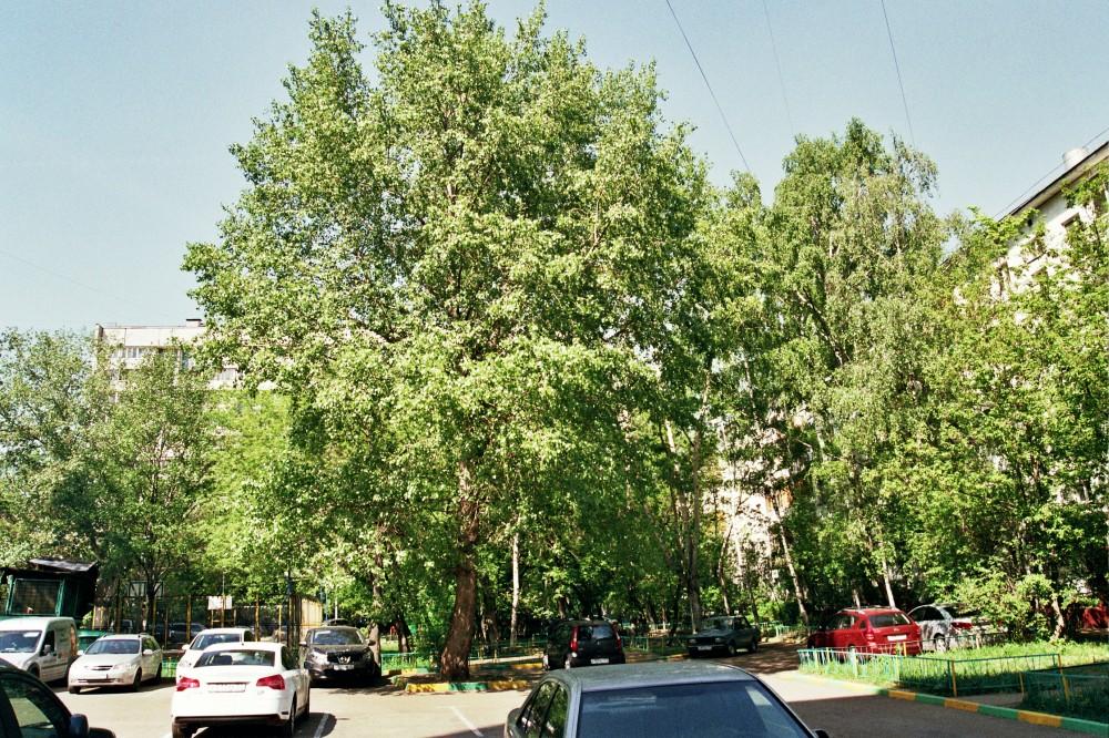 Дворы на проспекте Маршала Жукова