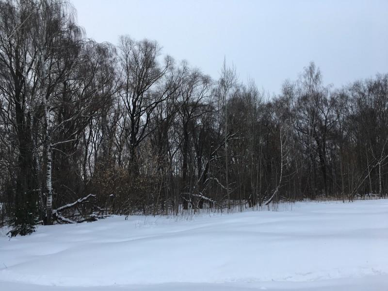 8. Снег и деревья на Щукинском полуострове