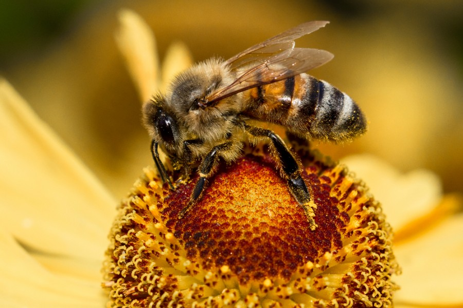 Картинки пчел и муравьев