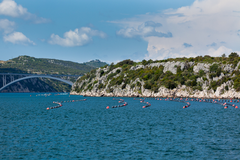 dvoevnore.com: Разведение мидий у берега Хорватии. Mussels growing near Croatia sea coast