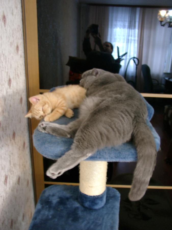 Кошачий знакомства