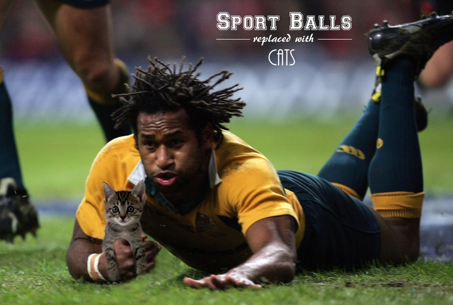 Sports-Balls-Replaced-With-Cats_pixanews-9