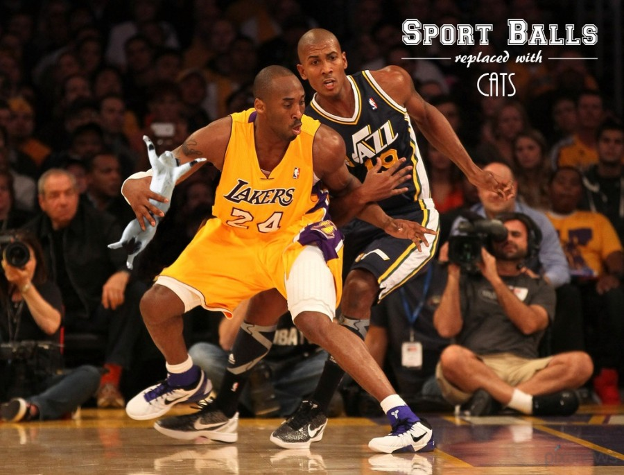 Sports-Balls-Replaced-With-Cats_pixanews-14