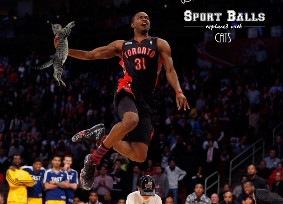 Sports-Balls-Replaced-With-Cats_pixanews-16