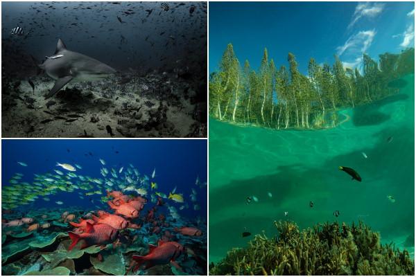 Удивительный подводный мир на снимках Жасмин Кэри