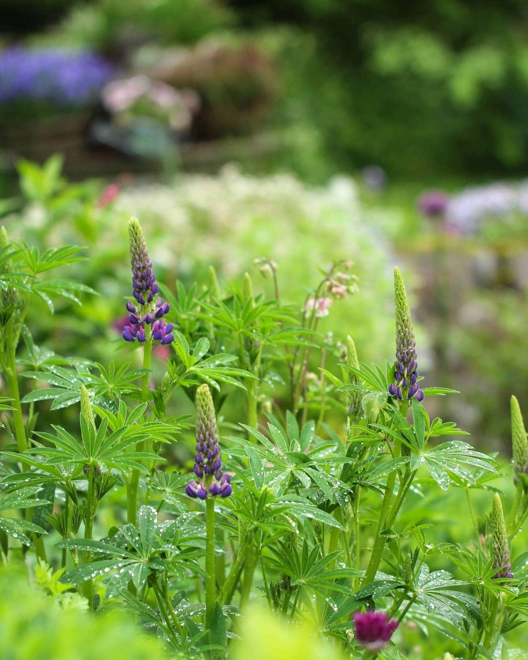 Красивые снимки цветов Таши Тайдель