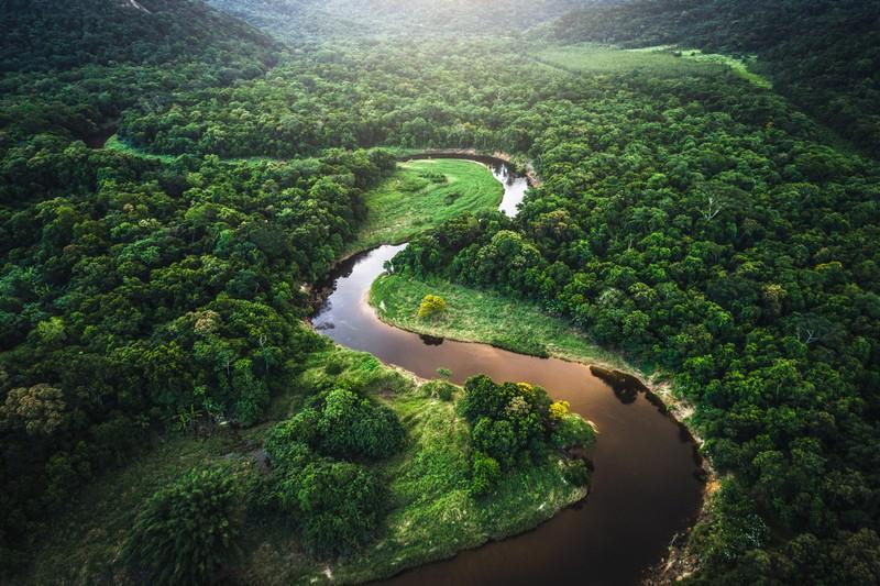 Самые большие леса мира