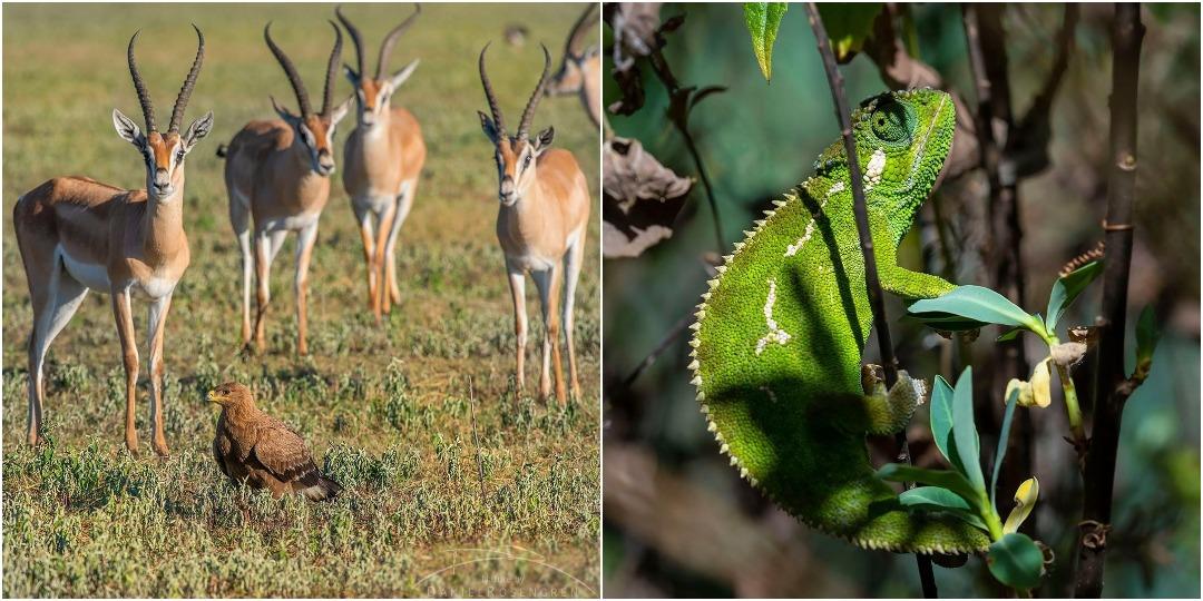 Дикие животные на фотографиях Даниэля Розенгрена