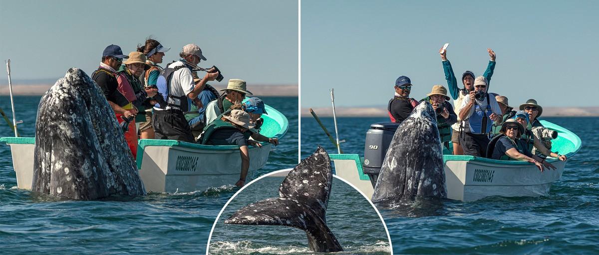 Всплыл не там: наблюдатели за китами смотрели в другую сторону, когда он вынырнул из воды