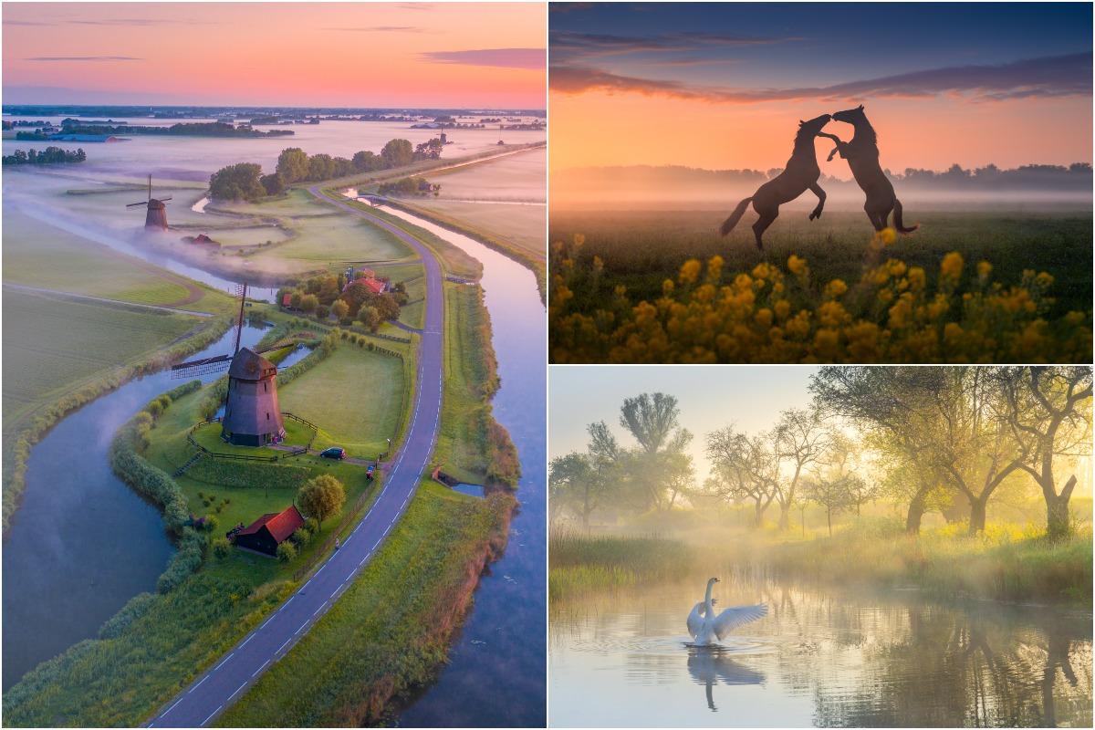 Волшебная весна в Нидерландах на снимках Альберта Дроса