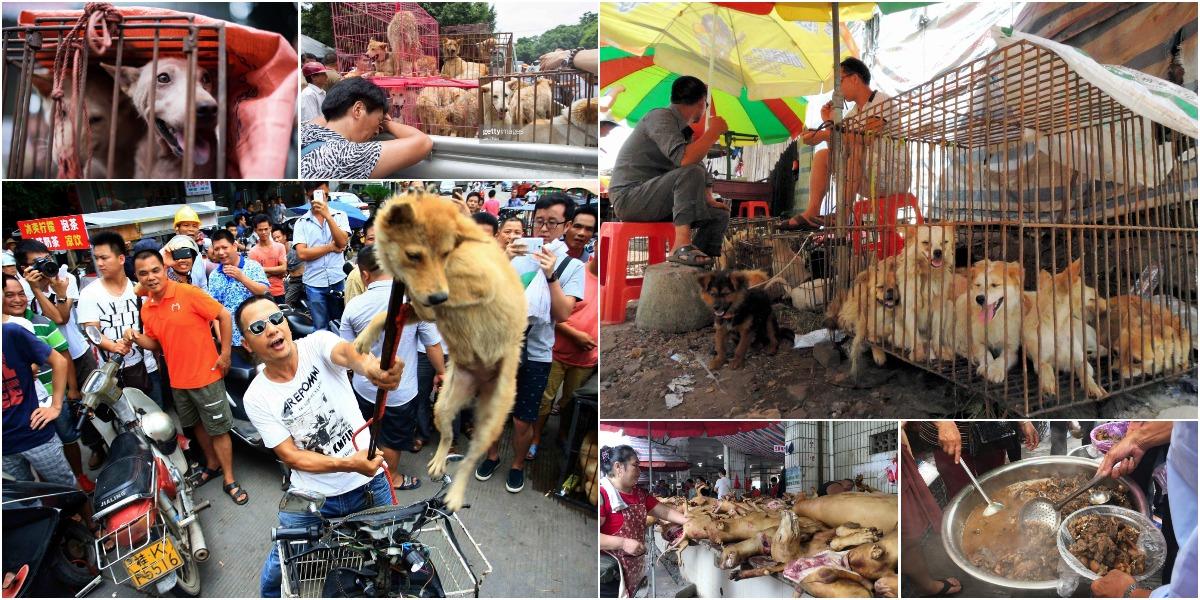 Фестиваль собачьего мяса проходит к Китае