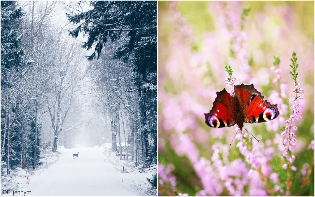 Природа, насекомые и цветы на снимках Дженни Мартенссон