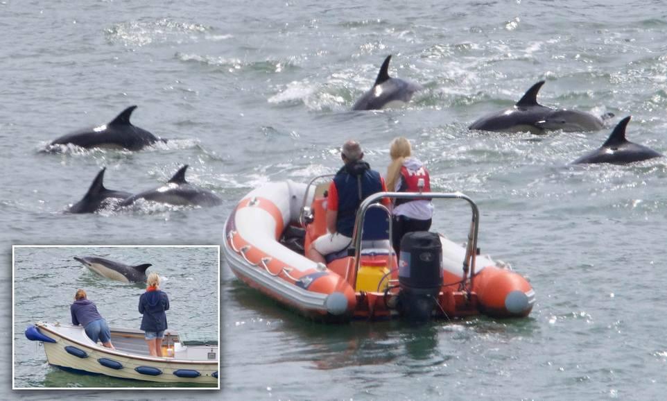 Интересное зрелище: стая дельфина подплыла к людям в британской реке
