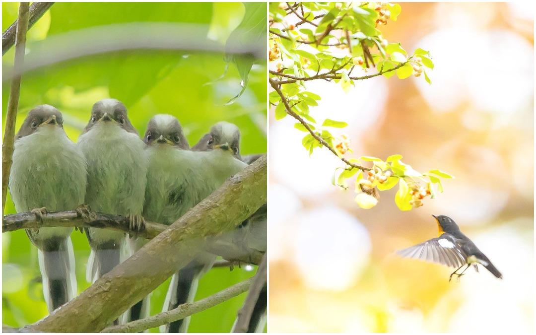 Симпатичные птички на снимках Кейсуке Ода