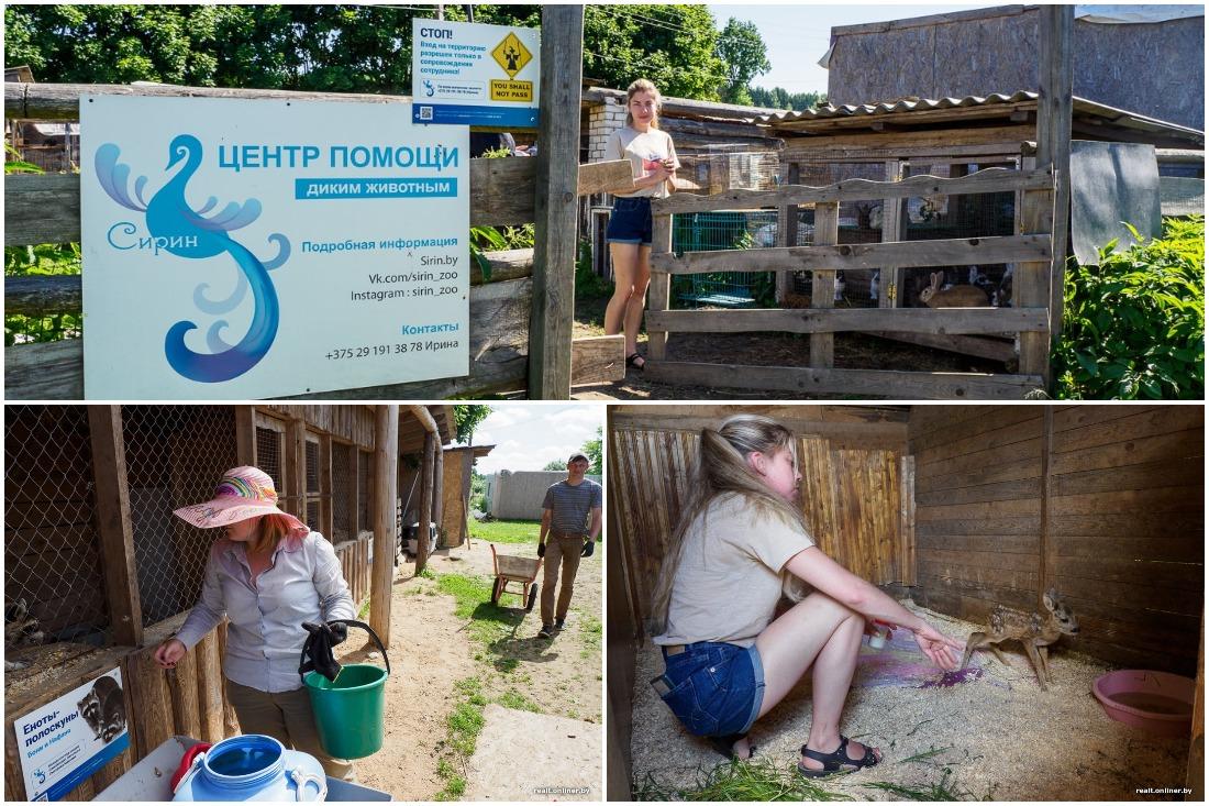 Проблемы с арендой: единственный в Беларуси центр помощи диким животным может закрыться