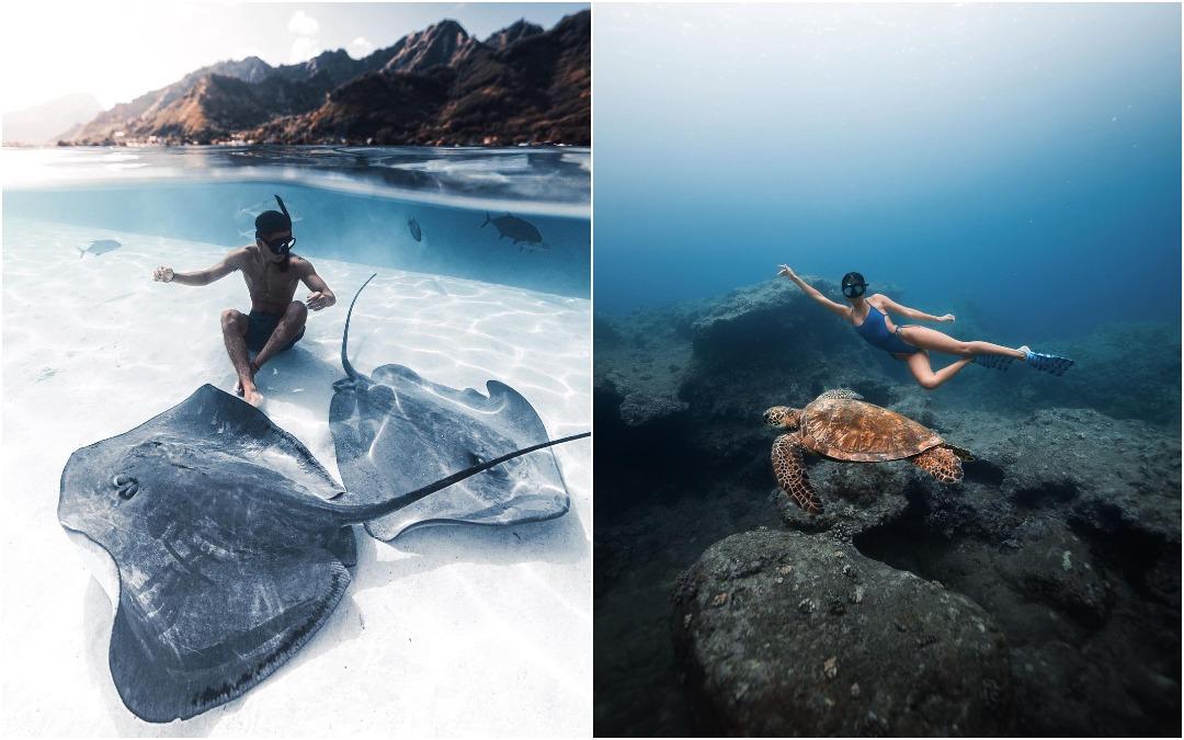Замечательные подводные снимки Нолана Омура