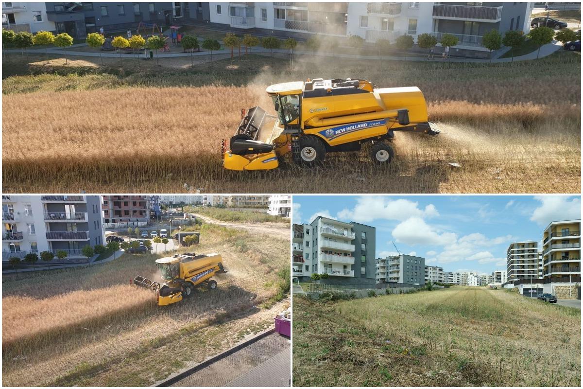 Удивительное зрелище: фермер убирает поле в окружении многоквартирных домов