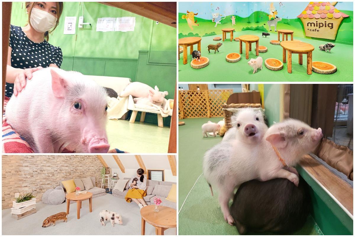 Японские кафе с очаровательными микро-свинками