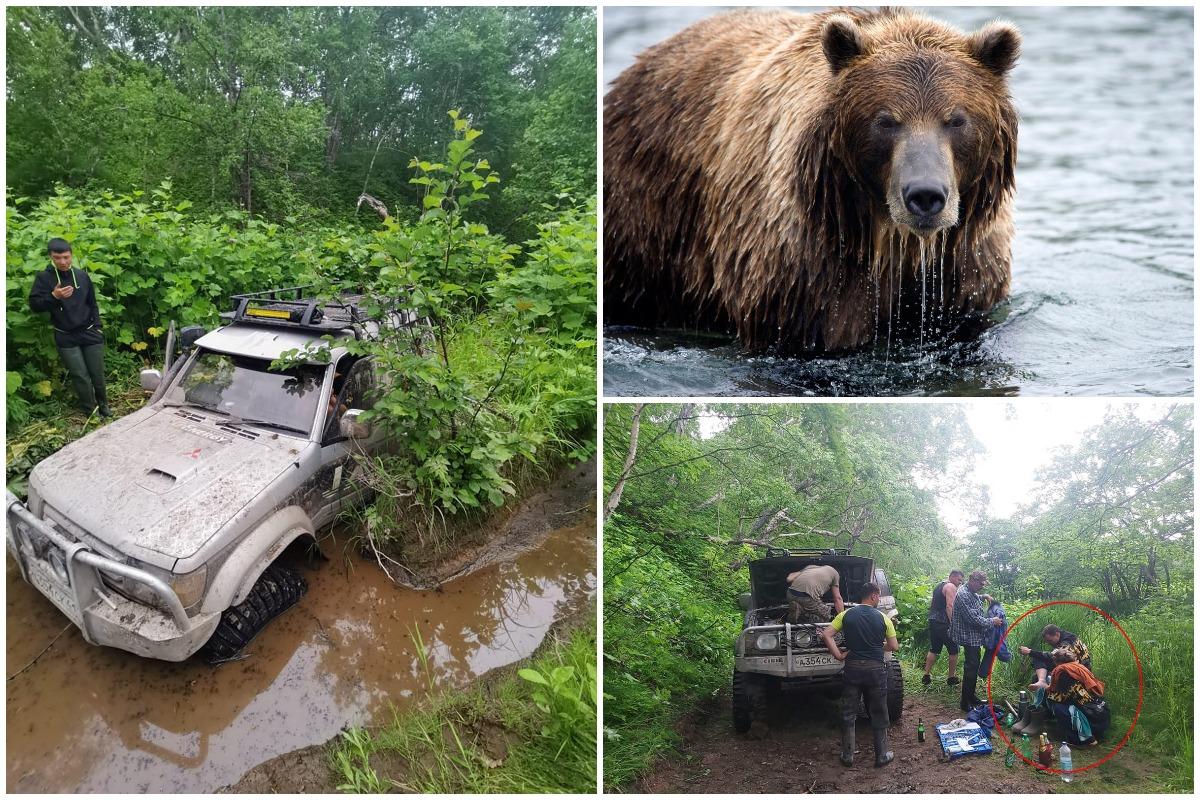 Супруги 2 суток провели на дереве, спасаясь от медведя на Камчатке