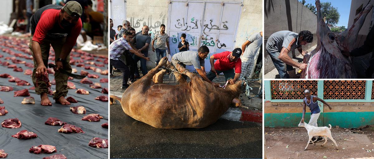 Реки крови на городских улицах: жертвоприношение животных в Курбан-байрам