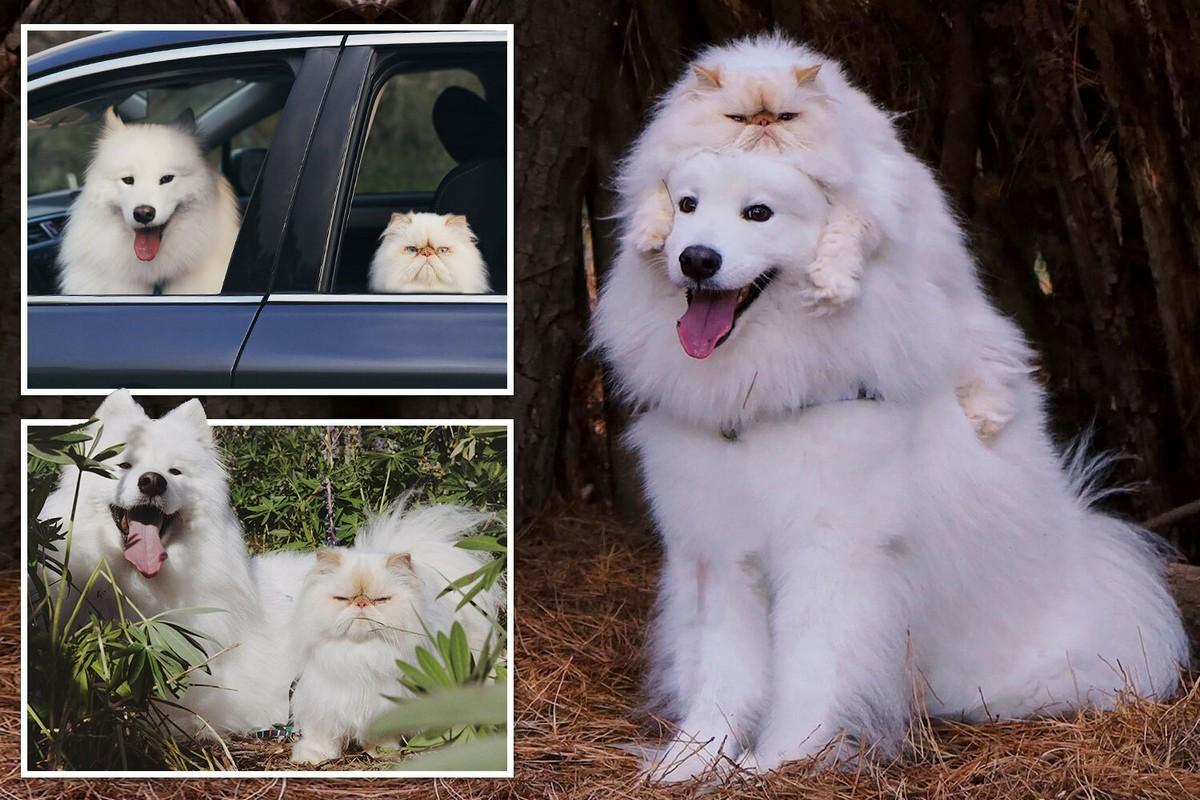 Улыбчивый пес и хмурый кот стали звездами в интернете