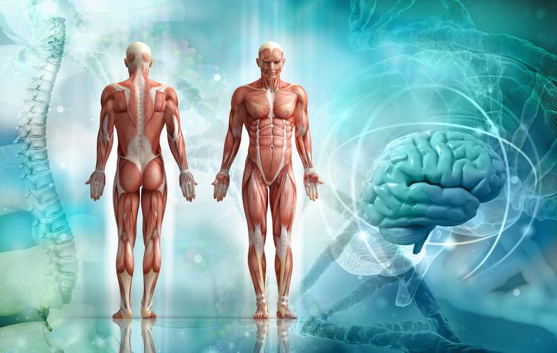 Распространённые заблуждения о теле человека