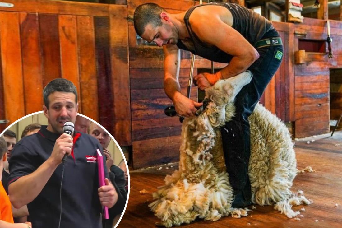 872 ягнят за 9 часов: британец установил мировой рекорд по стрижке овец