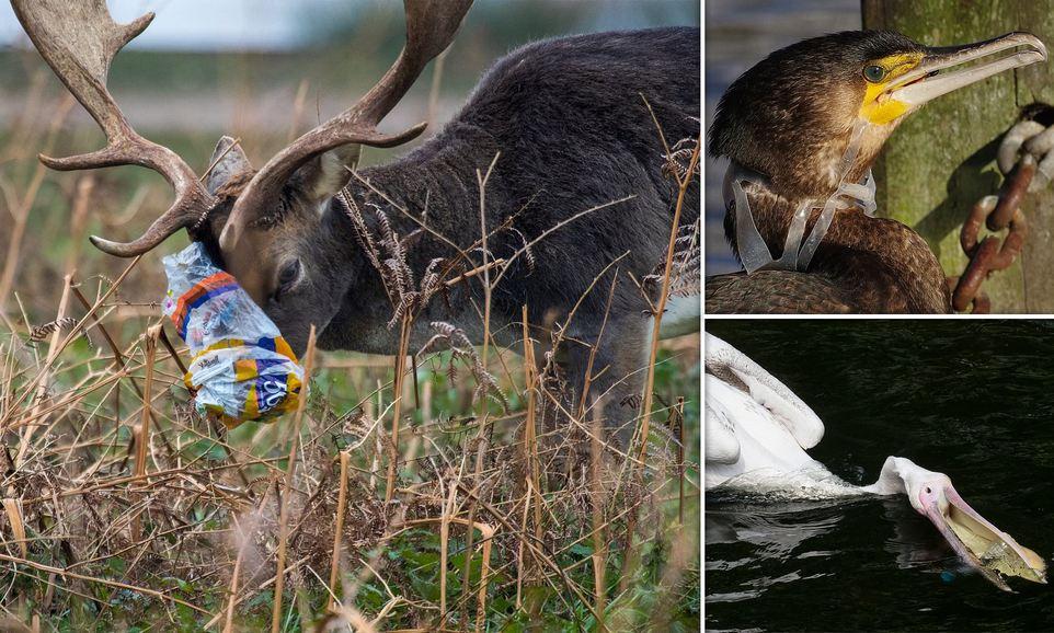 Удручающее воздействие мусора на дикую природу в лондонских парках