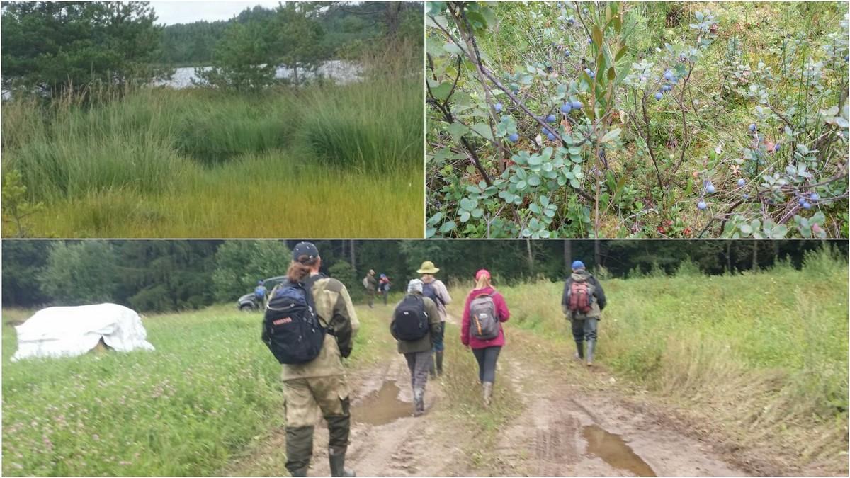 Новые маршруты по болотам разрабатывают в Республиканском ландшафтном заказнике «Ельня»