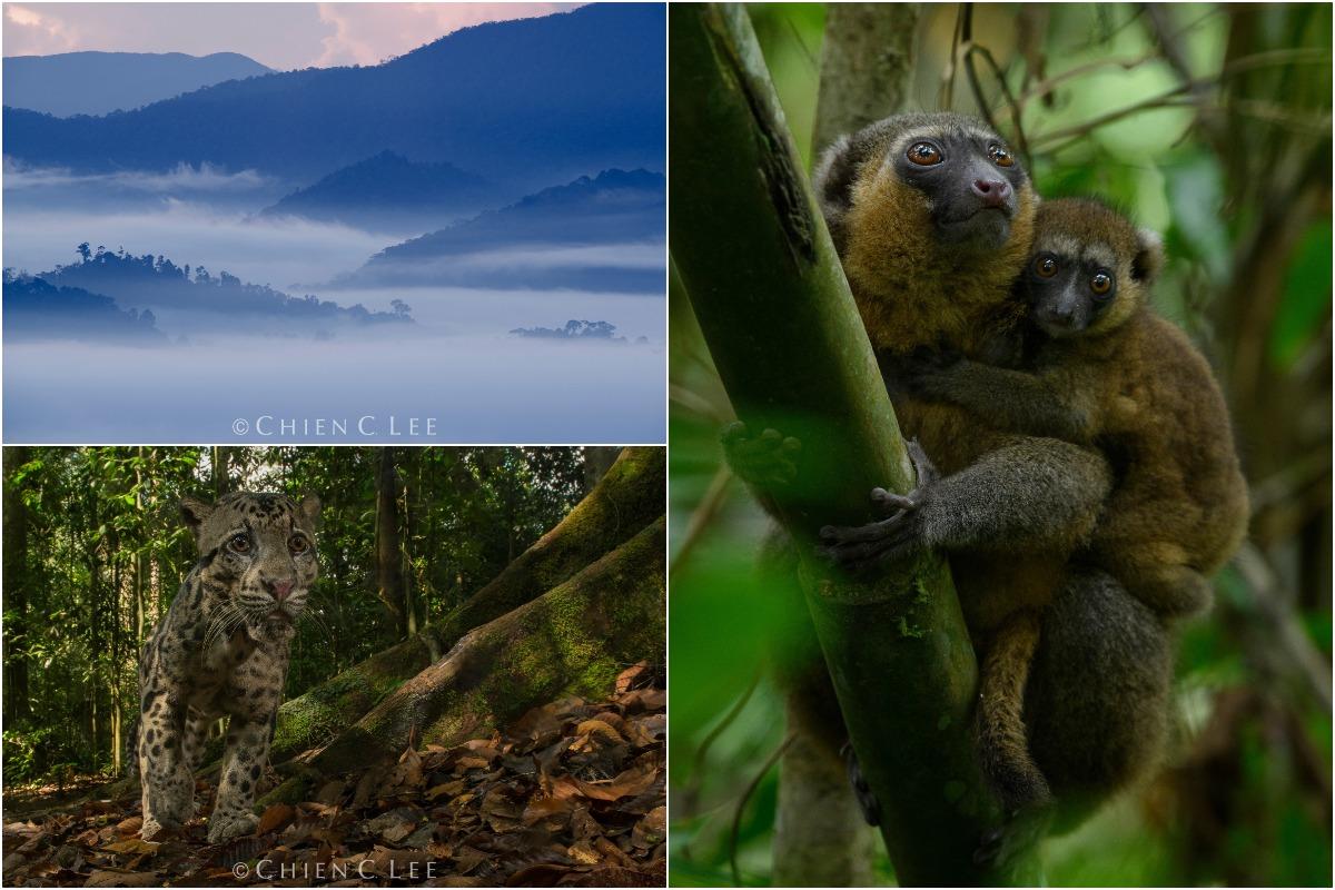 Природа и животные на фотографиях Чэна Си Ли