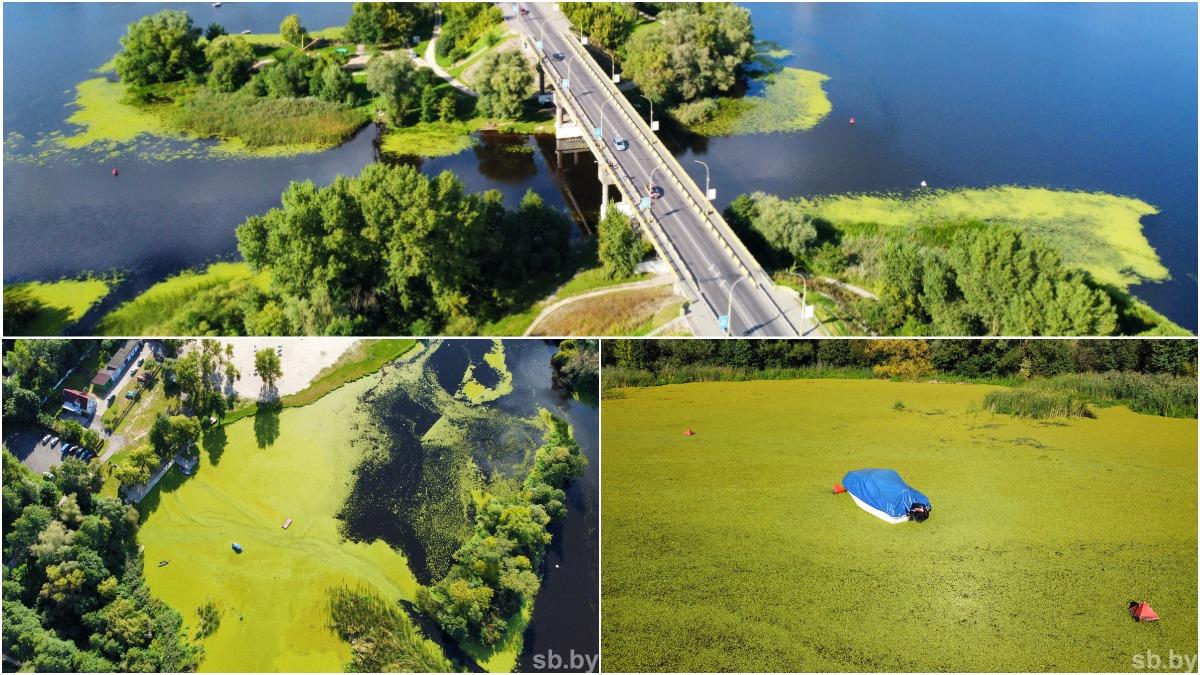 Обильное размножение водорослей: зеленая акватория реки Мухавец в Бресте