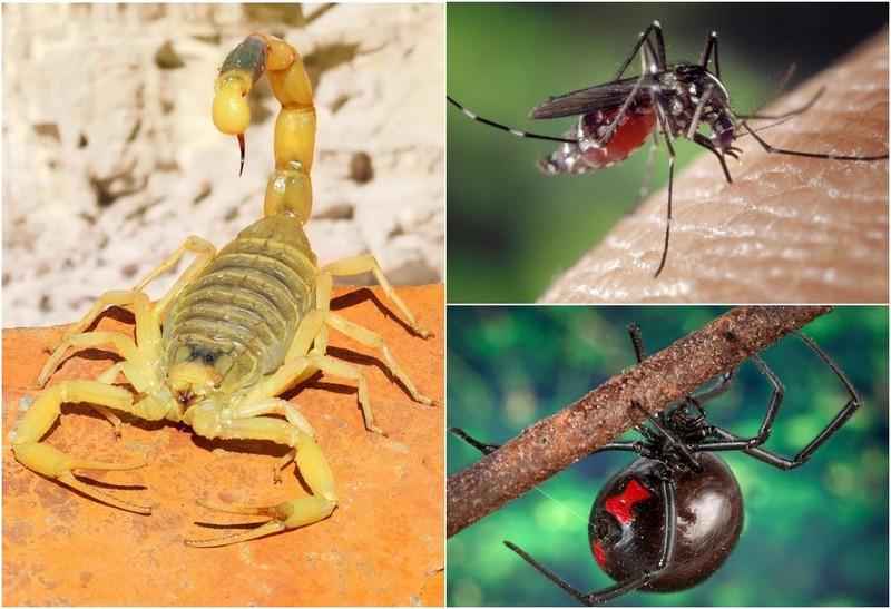 Самые смертельно опасные насекомые в мире