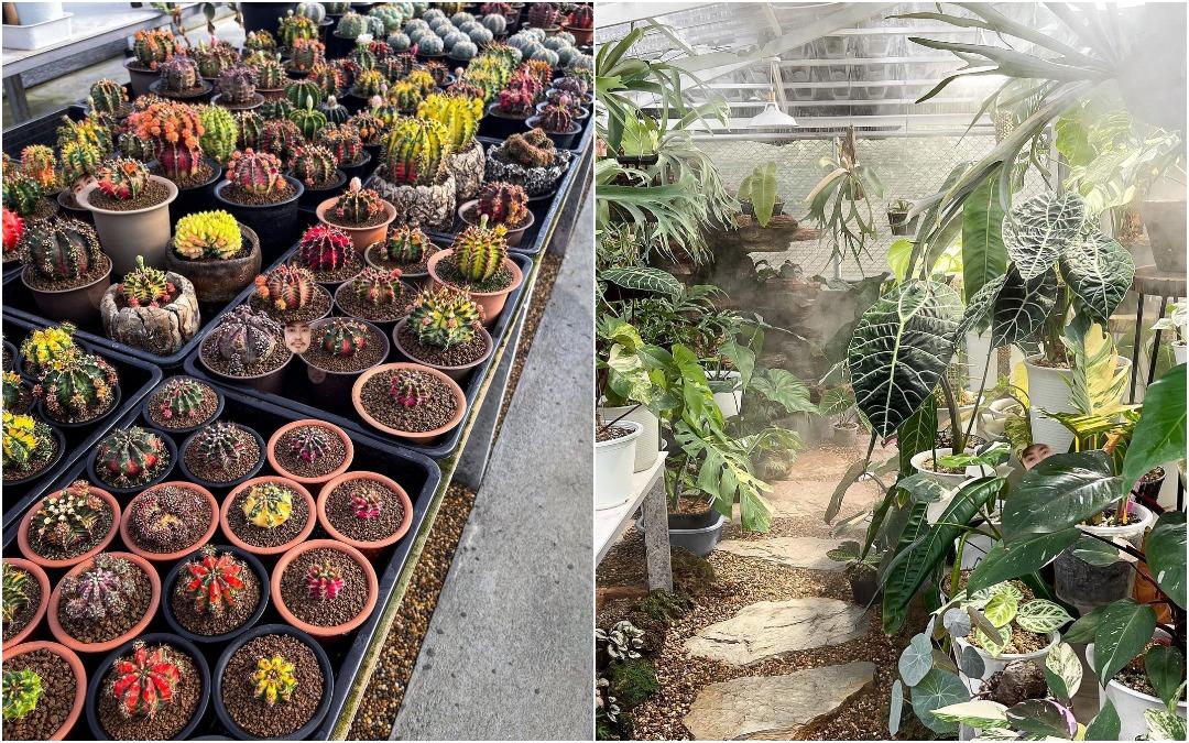 Кактусы и другие растения на фотографиях Ваширапола Дипрома