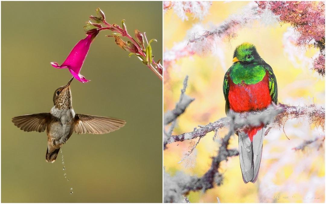Симпатичные птички на фотографиях Джалила Эль Харрара