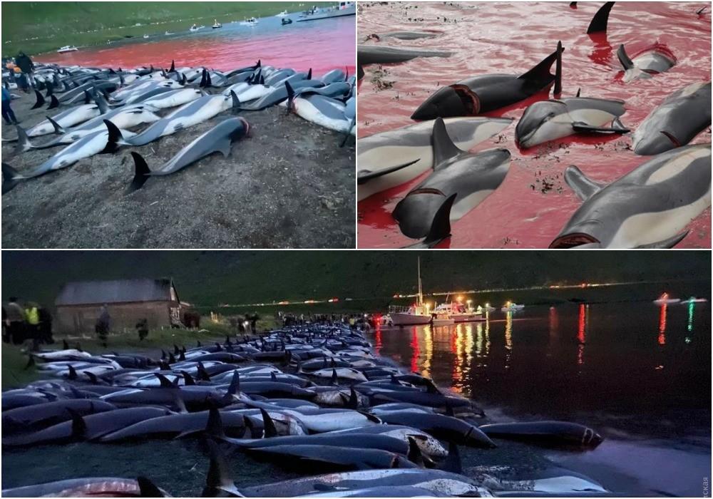 На Фарерских островах охотники по ошибке убили почти 1500 дельфинов